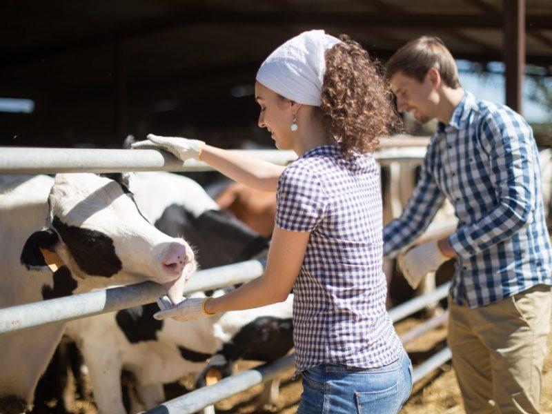 instalrea tinerilor fermieri PNDR 6.1